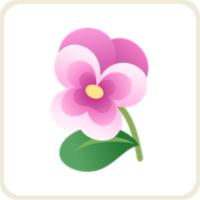 パンジー/ピンク