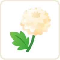 ピンポンマム/白