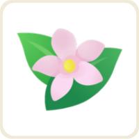 ジャスミン/ピンク